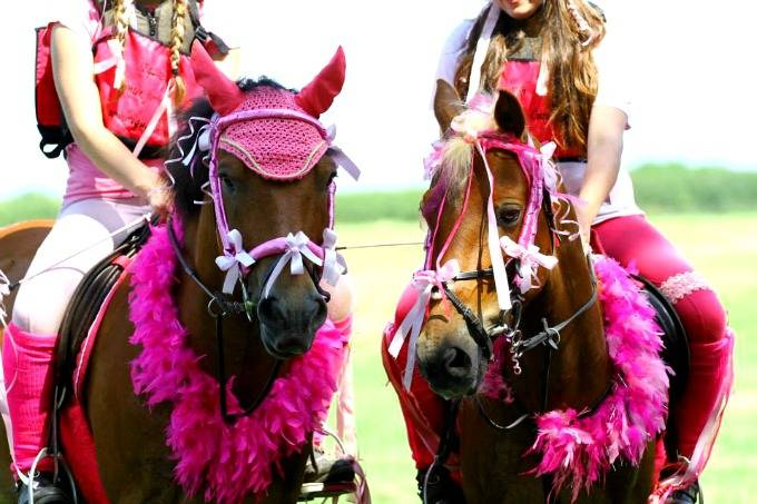 canter for a cure fundraising 2015