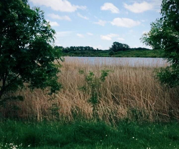 view between two trees out onto willen lake in Milton Keynes