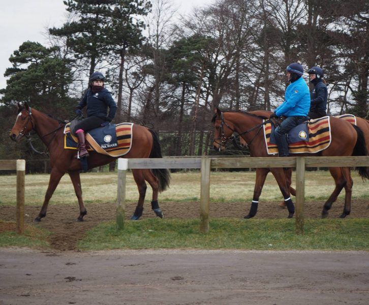 Horses training in Newmarket