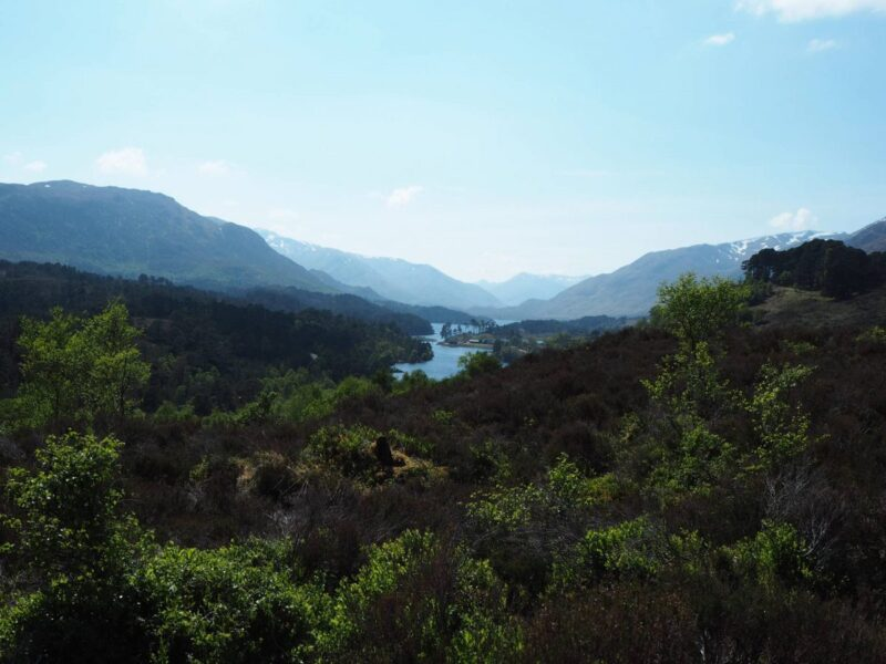 Visiting the Glen Affric National Park in Scotland